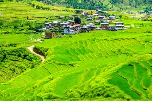 4Bhutan-rice-fields-and-traditional-houses-shutterstock_243795643
